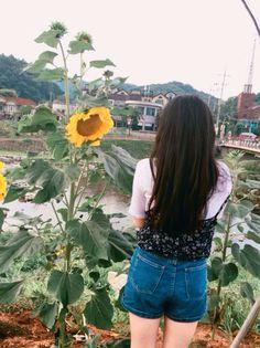 양평 Yangpyeong :-) #sunflower