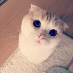 Just Try To Resist This Face
