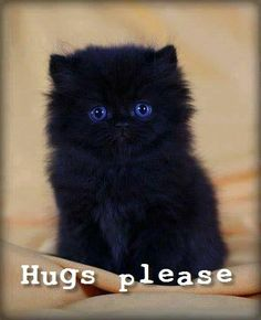 Of course I'll hug you beautiful, blue eyed kitten!