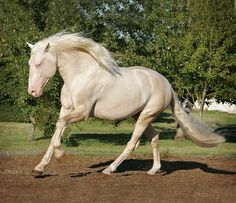 Cremello Beauty by Tse'ko, via Flickr