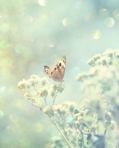mint butterfly photograph soft pale blue sage by TheGinghamOwl, $18.00