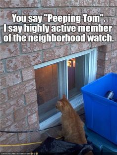 """You say """"Peeping Tom."""" I say highly active member of the neighborhood watch."""