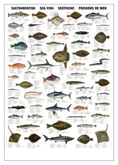 Suolaisen veden kalat juliste