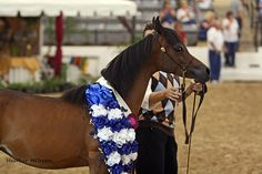 Filly at the 2010 Egyptian Event