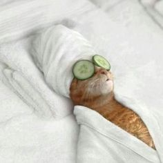-living large at Miss Kitty's Serenity Day Spa.
