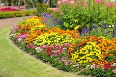 The long blooming roses in the bed are just joey in full bloom perennial flower beds can be considered a basic component of a well planned landscape design description from buzzle i searched for this on bing mightylinksfo