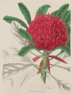 Ballarat Art Gallery Botanical Art exhibition