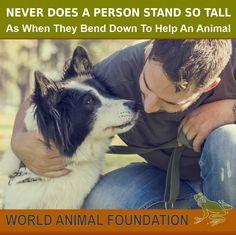 World animal federation