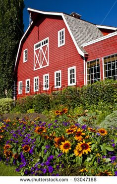 Flowers are lined up in front of a bright Red barn.