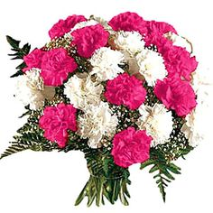 Shades of Carnation @ Rs.800.00