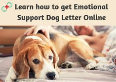 As mental health disorders are increasing gradually in the United States, an ESA is becoming a popular treatment option for many people. To legally live and fly with your ESA at no extra cost, Pet Support Doctor is your safest bet. Learn how to get emotional support dog letter with Pet Support Doctor to get a legit ESA letter within minutes. Esa Letter, Emotional Support Animal, Support Dog, Mental Health Disorders, United States, How To Get, Popular, Lettering, Learning