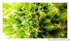 Dragon fruit | Judit Schober | Photo & Art Photo Art, My Photos, Photo Galleries, Dragon, In This Moment, Fruit, Gallery, Photography, Photograph