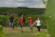 Duitse wijnen | Wijn Wandelen weekend |