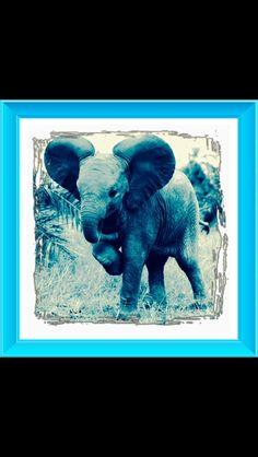 Cute baby elephant.