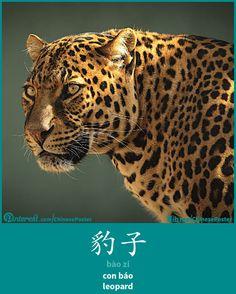 豹子 - bào zi - con báo - leopard