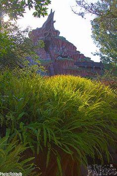 Splash Mountain spring foliage