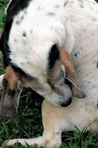 Vet Advice: Relief for Your Dog's Itchy Skin