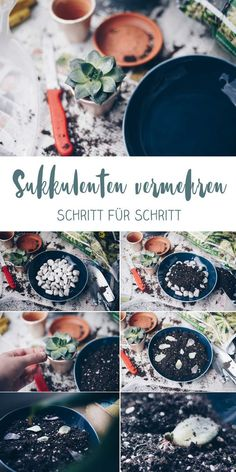 DIY Sukkulenten vermehren - kreativfieber DIY succulents multiply - how to multiply succulents - ste Mini Terrarium, Succulent Terrarium, Succulents Garden, Planting Flowers, Hair Rainbow, Cactus Pictures, Plants Are Friends, Hanging Baskets, Urban