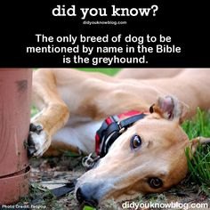 The only breed of dog to be mentioned by name in the Bible is the greyhound. Source