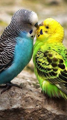 Siamo così diversi ma così uguali ;( amore impossibile cmq ha due strade :(