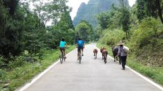 biking in the countryside, cattles on the way