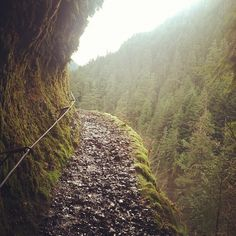 Eagle creek trail in Portland, such a fun hike (Katie we're taking you on this when you come!!)