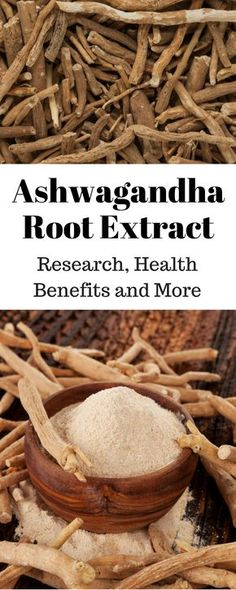 Ashwagandha root has a long history of medical use. But, what benefits does the extract offer? Should you consider this as a supplement?