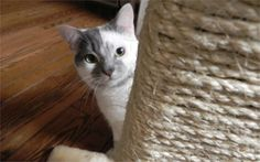 Keep your furniture looking new with a DIY scratching post. Your furry friend will love it!