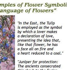 History of Flower Symbols