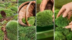 Discover All About Plant and Moss Wall Art Unique Plants, Real Plants, Exotic Plants, Indoor Plant Wall, Indoor Plants, Moss Wall Art, All About Plants, In Wall Speakers, Forest House