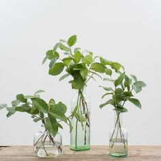 Classical Glass Bottle - Diy How to Crafts Bottle Vase, Glass Bottles, Glass Vase, Faux Plants, Indoor Plants, Housewarming Party Themes, Plant In Glass, Plants In Bottles, Bottles For Sale