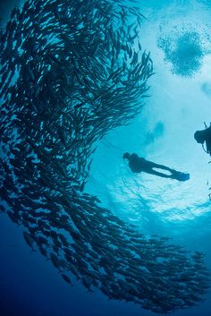 Diving in Balicasag, Bohol, Philippines.