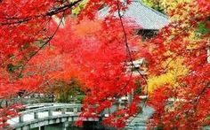 Xiangshan Red Leaves Festival