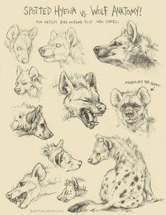Hyena refs
