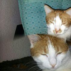 Micky & Max Friends