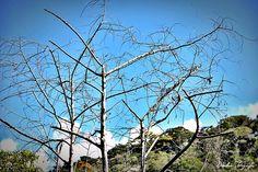 O azul do céu na mistura do verde da terra, no meio uma árvore pronta para morrer.