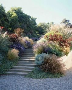 colourful mix of plants, gravel, Mediterranean style city garden, design by Elysian Landscapes (Step Design Exterior) Plantas Indoor, The Secret Garden, Garden Stairs, Dry Garden, Prairie Garden, Hill Garden, Garden Kids, Gravel Garden, Garden Paths
