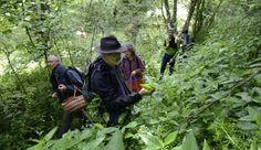 Botaniste autodidacte et naturopathe, Guy Lalière organise des stages pour apprendre à reconnaître et à cueillir les plantes médicinales. Une activité prisée par les citadins. L'Express l'a suivi, fin juin, sur les pentes des anciens volcans d'Auvergne.