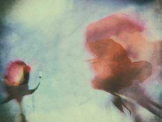 'Two roses' von Gabi Hampe bei artflakes.com als Poster oder Kunstdruck $18.03