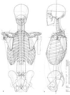 Anatomi Kemikler 10 / Anatomy Bones 10 #anatomi #anatomy #referans #reference…