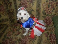 Angel is our cute Wonder Dog. She is family to us