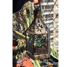 Potes vasos xícaras canecas prediletas... todos esquecidos no armário? Leve neste sábado no @casaramona das 12h30 até 19h. Enchemos eles de vida em uma semana!  Verde sempre caí bem na nossa casa! #suculentas #suculent #verde #vintage #decoração #oitominhocas