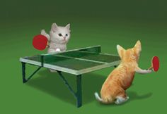 Animated Cat Screensavers | Ping Pong Cat Cats Kitty Kitten Kittens funny animal animals animated ...