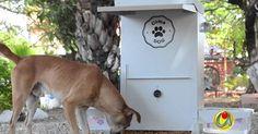 Comederos para los perros en las calles FIRMA Y COMPARTE ESTA PETICIÓN AHORA!
