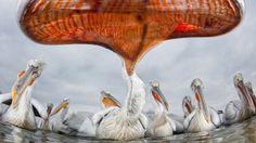 Mais de cem das melhores imagens recebidas pelo concurso em suas 17 categorias farão parte de uma exposição no Museu de História Natural de Londres, entre os dias 21 de outubro de 2011 e 11 de março de 2012, antes de embarcarem em um roteiro pela Grã-Bretanha e outros países