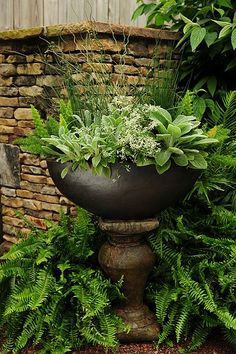 Lovely urn planted with various foliage and surrounded by ferns. Perfect for a secluded shady area.