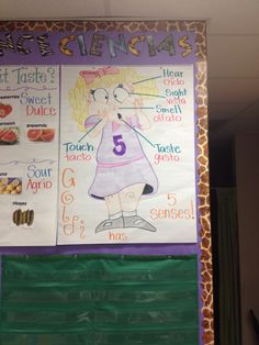 Of course all of the kiddos are familiar with Goldilocks so I used her for our 5 senses chart. I went ahead and drew her a head of time and then the students helped me label her 5 senses. Later we discussed the vocab in English and Spanish.