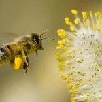bee pollen- 35g a day: immune booster, prevents cancer & other diseases, slows aging, promotes weight loss, good for menopause