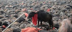 In an act of compassion and progress, Nepal is banning the largest animal sacrifice ritual in the world. You've probably heard about China's annual Yulin Dog Meat festival, but do you know about Nepal's Gadhimai slaughter festival? According to Times of India, the event, which has taken place every five years for the past three centuries, has seen temple grounds awash with the blood of animals slaughtered in the name of 'tradition'. Thanks to activists' efforts, however, the event has been…