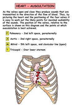 Cardiac - Auscultation (human)